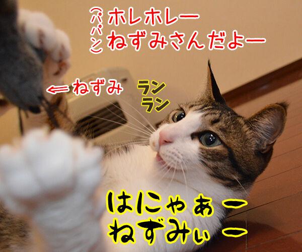 ねこと遊ぶということ 猫の写真で4コマ漫画 2コマ目ッ