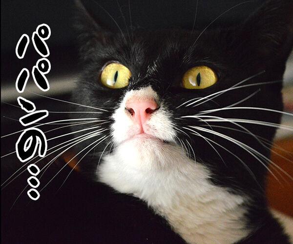 はじまりのシャウト 猫の写真で4コマ漫画 1コマ目ッ