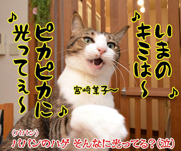 パパンを見るとあのCMを思い出す 猫の写真で4コマ漫画 4コマ目ッ