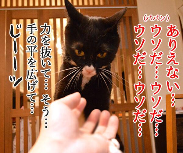 ウソだッ!!ウソだぁッ!! 猫の写真で4コマ漫画 3コマ目ッ