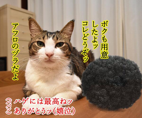 クリスマスプレゼントのお返しは? 猫の写真で4コマ漫画 2コマ目ッ