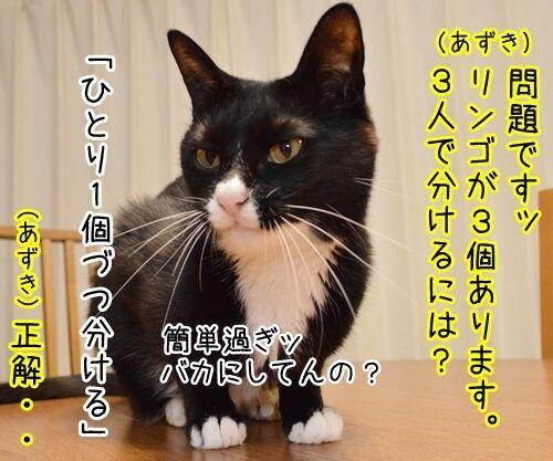 算数の問題ですッ!! 猫の写真で4コマ漫画 1コマ目ッ