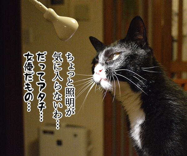 職業:女優 猫の写真で4コマ漫画 1コマ目ッ