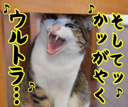 ウルトラソウル 猫の写真で4コマ漫画 3コマ目ッ