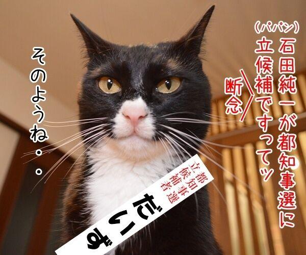 石田純一氏、東京都知事選に出馬断念 猫の写真で4コマ漫画 1コマ目ッ