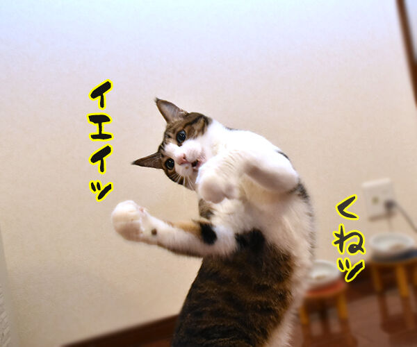 あずきさんとひもであそぶ 猫の写真で4コマ漫画 4コマ目ッ