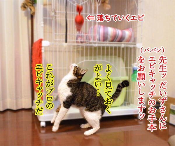 エビキャッチ 其の四 猫の写真で4コマ漫画 1コマ目ッ