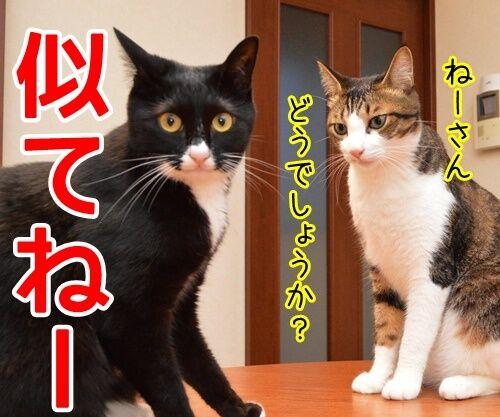 ネタ見せ 其の二 猫の写真で4コマ漫画 4コマ目ッ