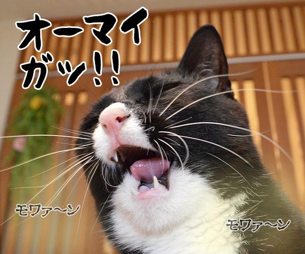 おなかがギュルッ 猫の写真で4コマ漫画 5コマ目ッ