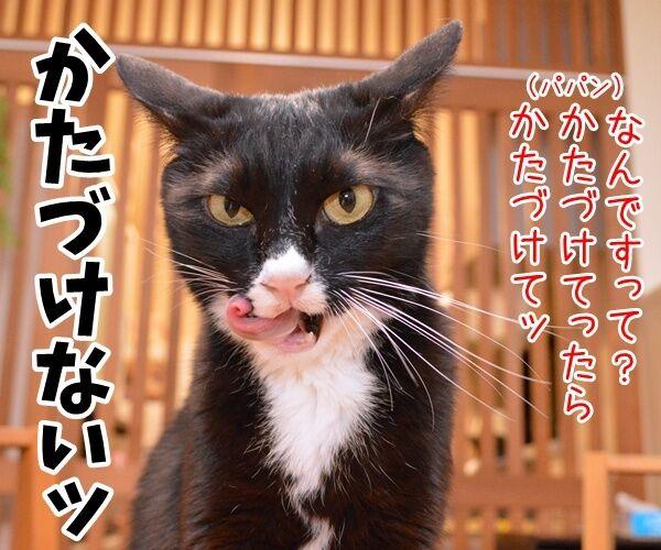 遊んだオモチャはかたづけてよねッ 猫の写真で4コマ漫画 2コマ目ッ