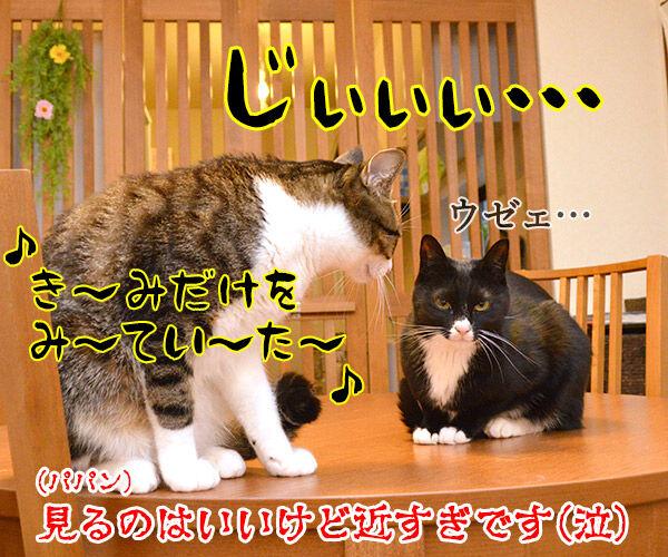 君だけを見ていた 猫の写真で4コマ漫画 4コマ目ッ