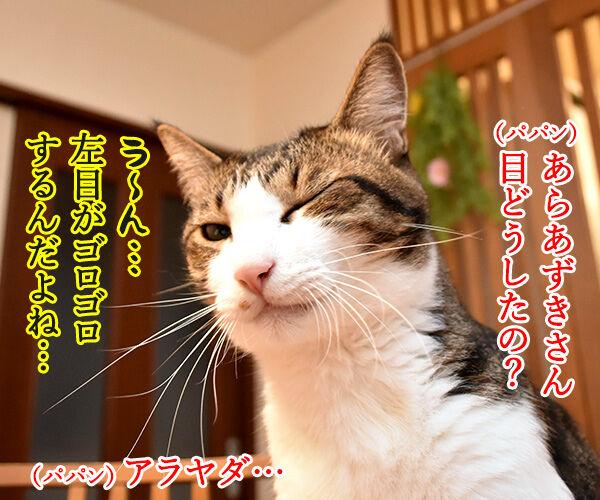 目がゴロゴロしてるのよッ 猫の写真で4コマ漫画 1コマ目ッ