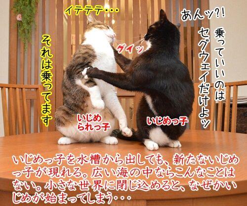 イジメ・ダメ・ゼッタイ 猫の写真で4コマ漫画 2コマ目ッ