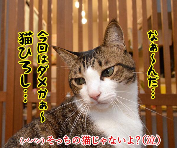 猫の足の速さは? 猫の写真で4コマ漫画 4コマ目ッ