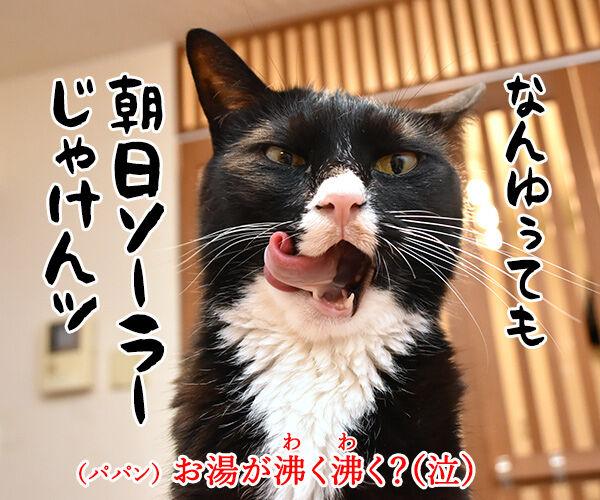 11月3日は文化の日なのよッ 猫の写真で4コマ漫画 4コマ目ッ