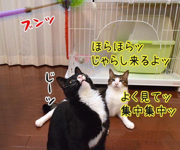 アドバイス 猫の写真で4コマ漫画 1コマ目ッ