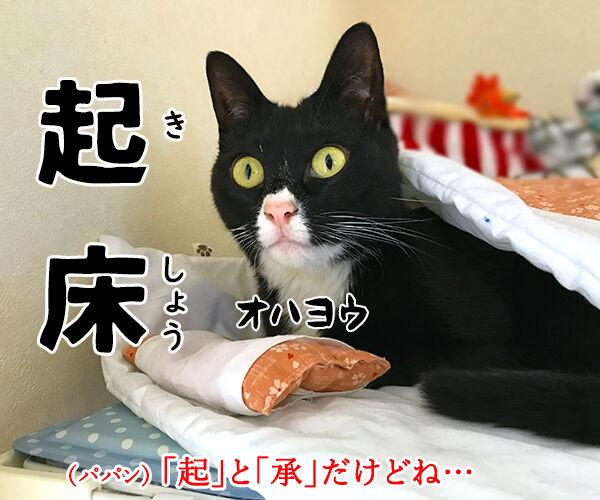 4コマまんがの基本といえば? 猫の写真で4コマ漫画 2コマ目ッ