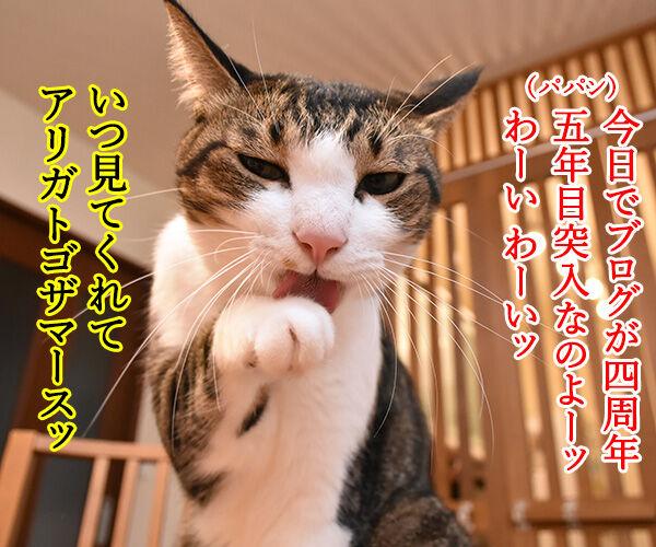 今日から5年目突入デースッ 猫の写真で4コマ漫画 1コマ目ッ