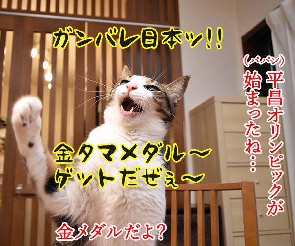 平昌オリンピックが始まったわねッ 猫の写真で4コマ漫画 1コマ目ッ