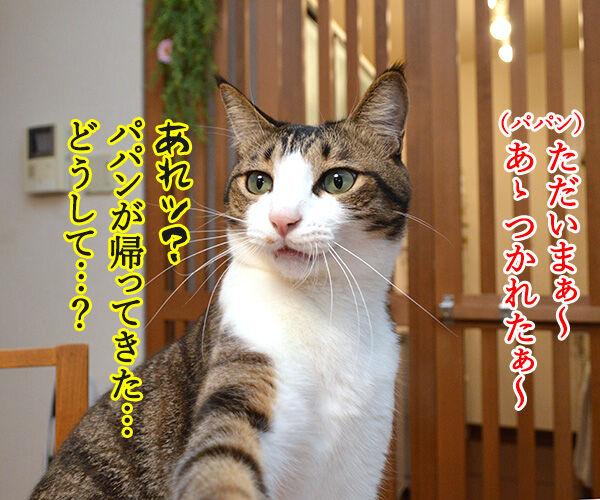 えッ!?パパンが帰ってきた…… 猫の写真で4コマ漫画 1コマ目ッ