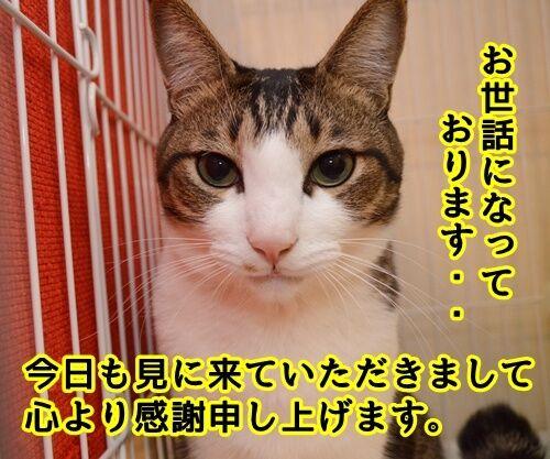 お世話になっております。 猫の写真で4コマ漫画 1コマ目ッ