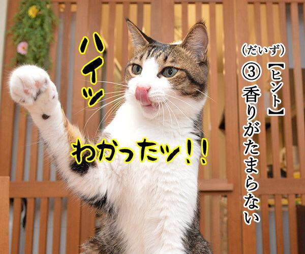 土用の丑の日でクイズなの 猫の写真で4コマ漫画 3コマ目ッ