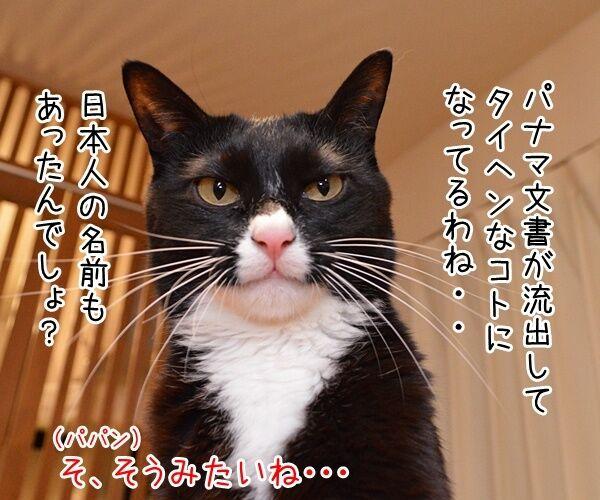 パナマ文書に載ってる日本人の名前は? 猫の写真で4コマ漫画 1コマ目ッ
