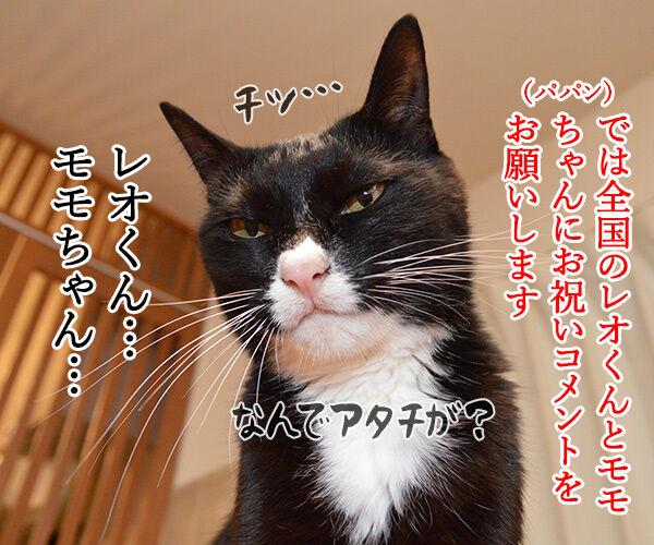 愛猫の名前ランキング発表ッ 猫の写真で4コマ漫画 3コマ目ッ