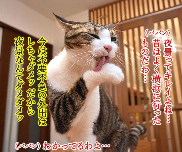 横浜の夜景ってキレイだよねッ 猫の写真で4コマ漫画 1コマ目ッ