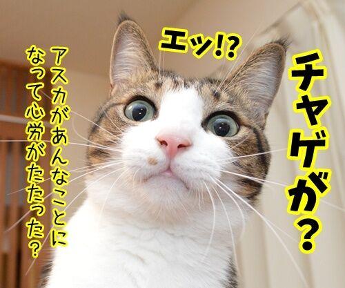 あのチャゲが…… 猫の写真で4コマ漫画 2コマ目ッ