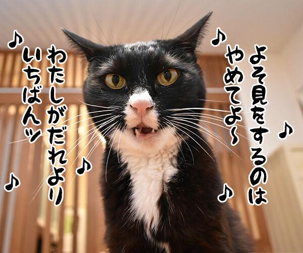 『うる星やつら』の高橋留美子先生が紫綬褒章だから唄うのよッ 猫の写真で4コマ漫画 2コマ目ッ