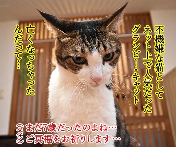 不機嫌な猫『グランピー・キャット』が亡くなったんですってッ 猫の写真で4コマ漫画 1コマ目ッ
