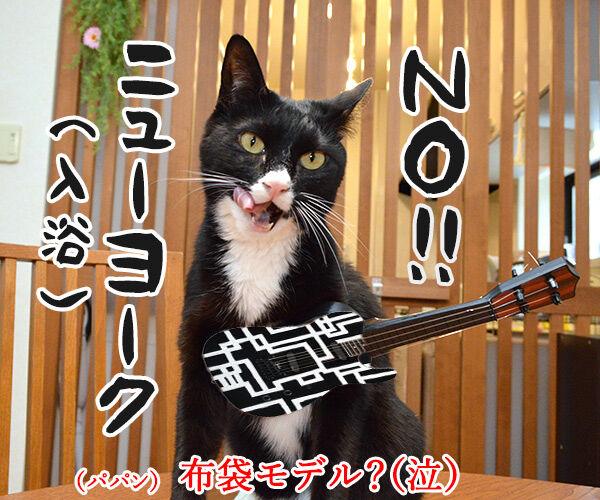 ひさしぶりにおフロに入りましょうか? 猫の写真で4コマ漫画 4コマ目ッ