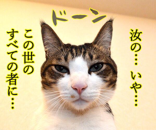 私は神…… 猫の写真で4コマ漫画 1コマ目ッ