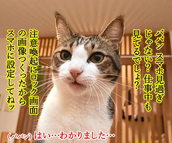 猫に叱られたい人のためのロック画面なのッ 猫の写真で4コマ漫画 1コマ目ッ