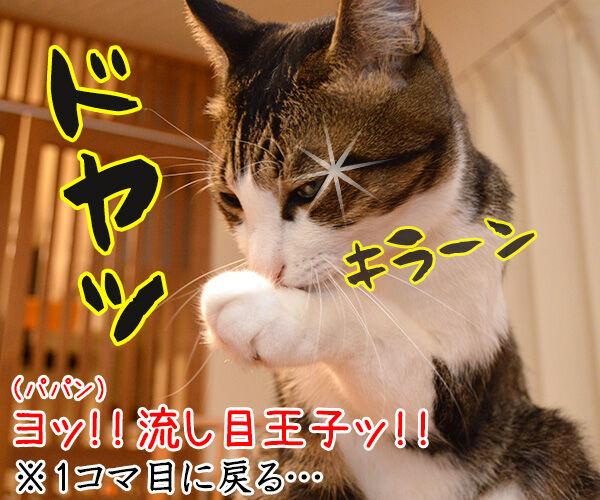 えぺえぺ 猫の写真で4コマ漫画 4コマ目ッ