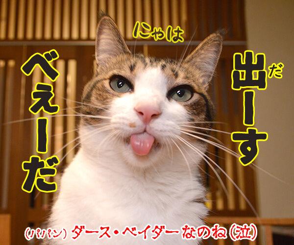 スター・ウォーズでダジャレ4連発ッ!! 猫の写真で4コマ漫画 6コマ目ッ