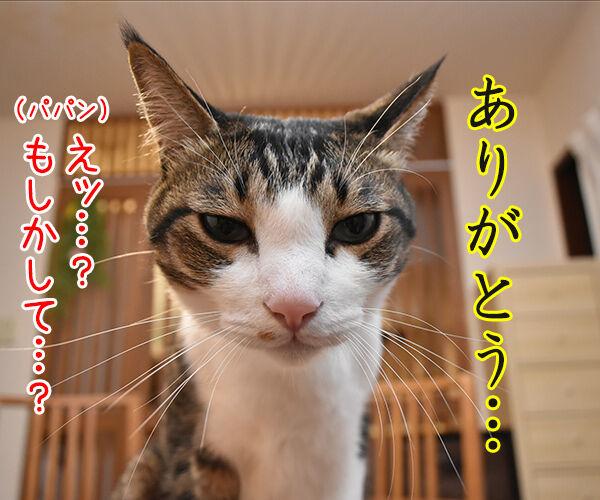 きょうは父の日だものッ 猫の写真で4コマ漫画 1コマ目ッ