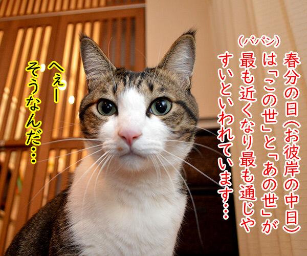 虹の橋から帰ってきてね 猫の写真で4コマ漫画 1コマ目ッ