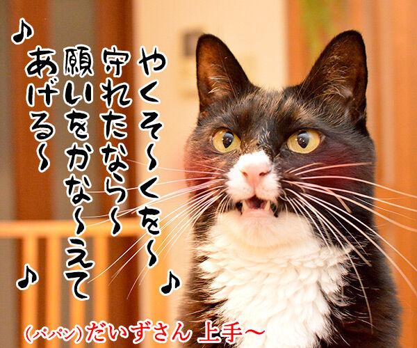 今日はパパンちの忘年会 猫の写真で4コマ漫画 2コマ目ッ