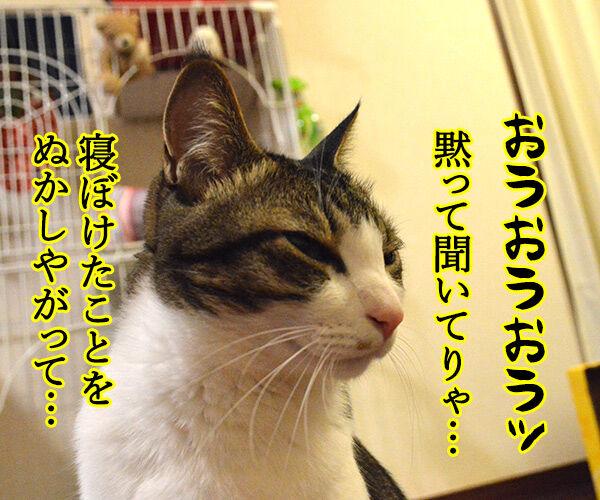 遠山のあずきさん 其の一 猫の写真で4コマ漫画 3コマ目ッ