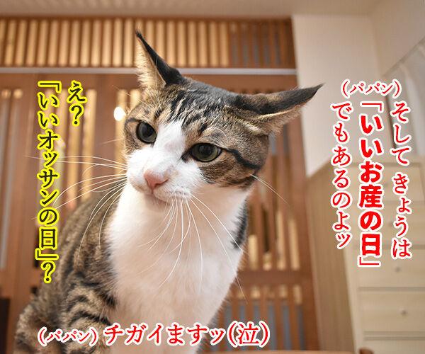11月3日は「文化の日」で「いいお産の日」なのよッ 猫の写真で4コマ漫画 2コマ目ッ