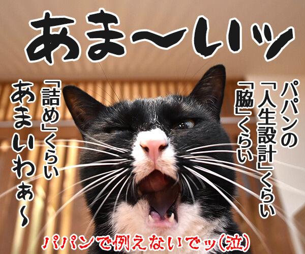 あま~いッ 猫の写真で4コマ漫画 4コマ目ッ