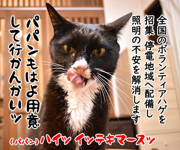 北海道胆振東部地震 心よりお見舞い申し上げます 猫の写真で4コマ漫画 4コマ目ッ