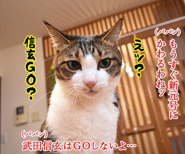 新元号は信玄GOなの? 猫の写真で4コマ漫画 1コマ目ッ