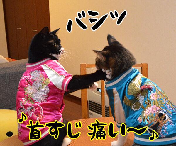あずきとだいずのあたりまえ体操? 猫の写真で4コマ漫画 3コマ目ッ