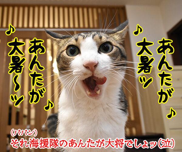 きょうは大暑(たいしょ)なんですってッ 猫の写真で4コマ漫画 4コマ目ッ