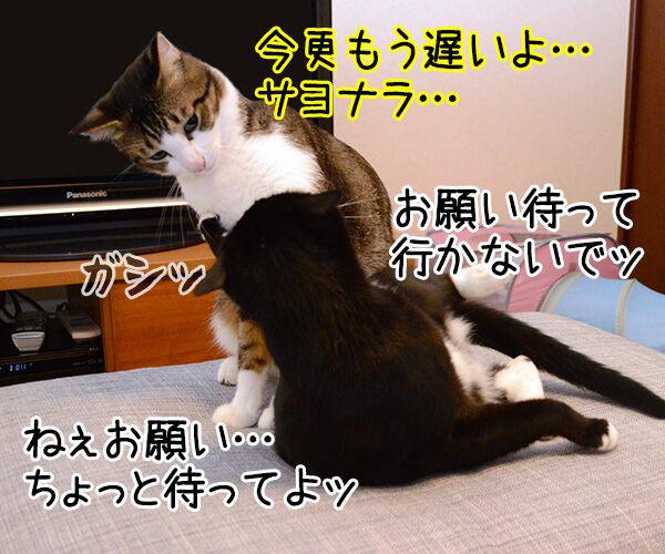 ぐうたら主婦 猫の写真で4コマ漫画 3コマ目ッ