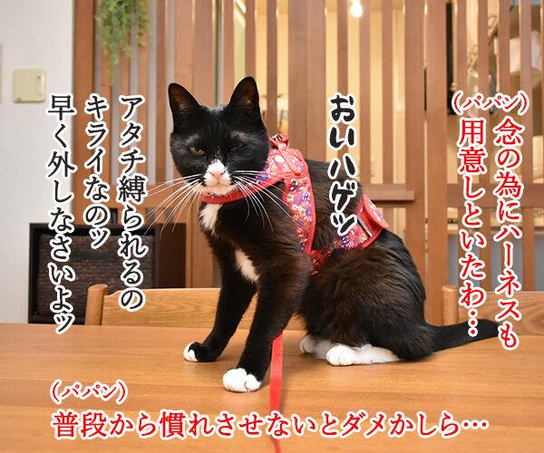きょうは『防災の日』なんですってッ 猫の写真で4コマ漫画 3コマ目ッ