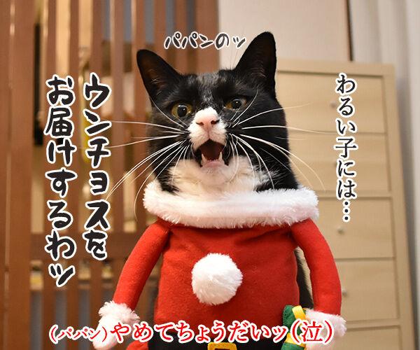 サンタガールとサンタボーイがプレゼントをお届けするわよッ 猫の写真で4コマ漫画 2コマ目ッ